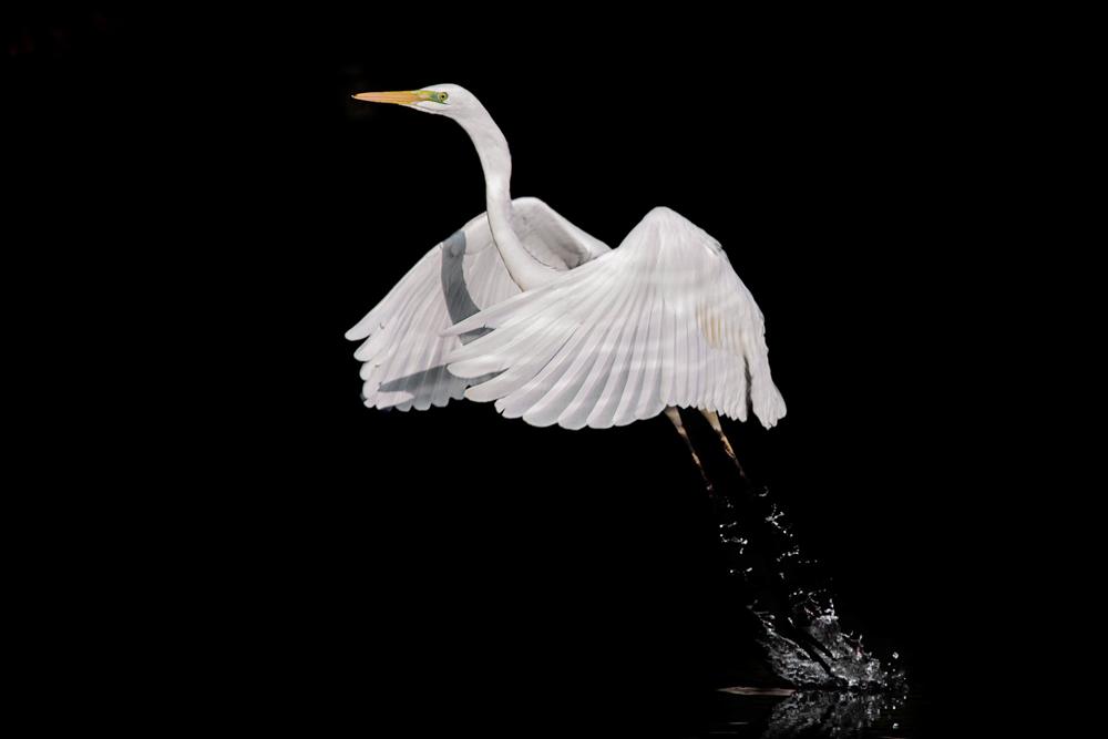 1024 Naturalistica Diego Ravenna Fotografo 1D3L3068