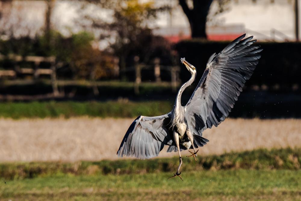 1038 Naturalistica Diego Ravenna Fotografo _16A0958
