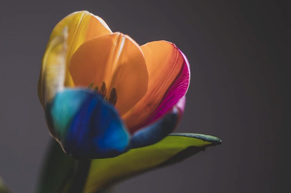 ritratto fotografico fiore